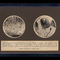 Photomicrographs of Cajal's slides prepared by Charles Sherrington. Property of the University of Oxford's Department of Physiology, Anatomy, and Genetics